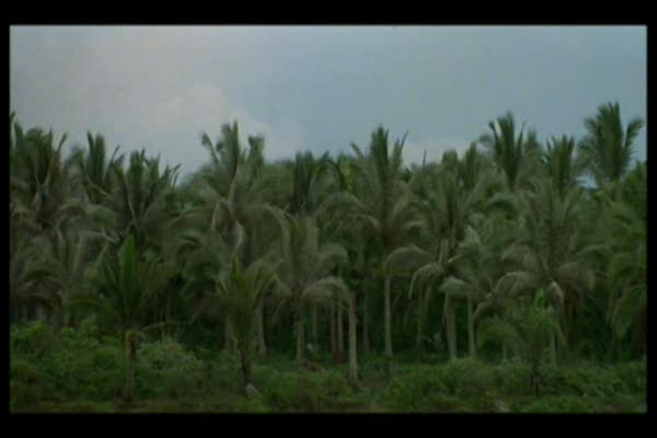 Apokalipszis most (Apocalypse now) 1.