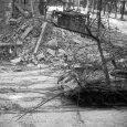1956: sortüzek és lincselések Budapesten